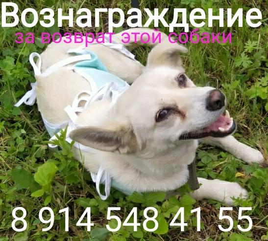 Потеряна собака